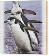 Chinstrap Penguins 1 Wood Print