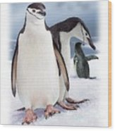 Chinstrap Penguins 2 Wood Print