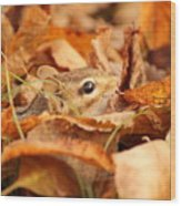 Chipmunk Among The Leaves Wood Print