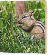 Chipmunk Cutie Wood Print