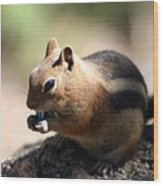 Chipmunk Eating A Piece Of Blue Candy Wood Print