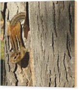 Chipmunk In Fall Wood Print