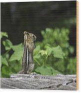 Chipmunk In South Lake Tahoe  Wood Print