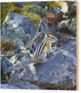 Chipmunk On The Rocks Wood Print