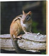 Chipmunk Portrait Wood Print