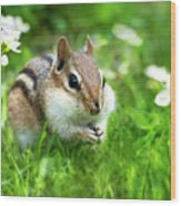 Chipmunk Saving Seeds Wood Print