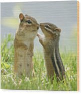 Chipmunks In Grasses Wood Print by Corinne Lamontagne