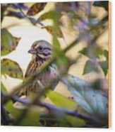 Chipping Sparrow In The Brush Wood Print