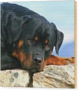 Chiron The Rottweiler  Wood Print
