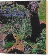 Chitactac Ohlone Mortars Wood Print