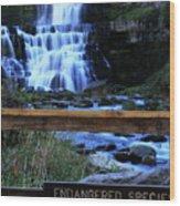 Chittenango Falls State Park Wood Print