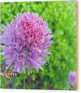 Chive And Bee Wood Print