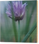Chive Flower 2 Wood Print