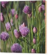Chive Flowers Wood Print