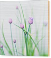 Chives 1 Wood Print