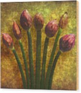 Chives Buds Wood Print