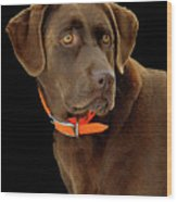 Chocolate Lab Wood Print by William Jobes