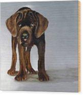 Chocolate Labrador Puppy Wood Print by Dick Larsen