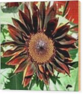 Chocolate Sunflower Wood Print