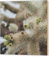 Cholla Cactus Garden Closeup Wood Print