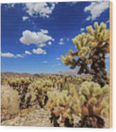 Cholla Cactus Garden In Joshua Tree National Park Wood Print
