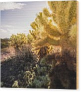 Cholla Cactus Wood Print