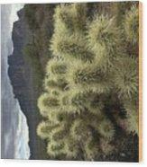 Cholla Cactus Wood Print