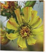 Cholla Flower H1848 Wood Print