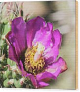 Cholla Flower Wood Print