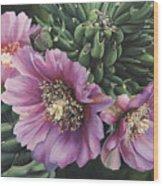 Cholla Flowers Wood Print