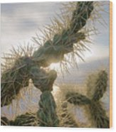 Cholla, Organ Pipe National Monument, Az  January 2015 Wood Print