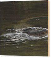 Chomper Wood Print