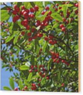 Christmas Berries Wood Print