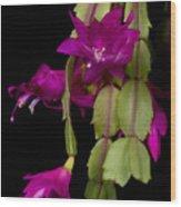 Christmas Cactus Purple Flower Blooms Wood Print