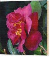 Christmas Camellia Wood Print