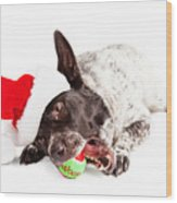 Christmas Dog Chewing On Tennis Ball Wood Print