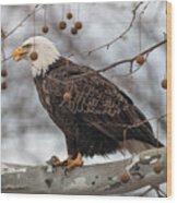 Christmas Eagle Wood Print