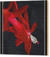 Christmas Flower Wood Print