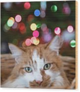 Christmas Kitty In A Basket Wood Print