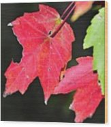 Christmas Leafs Wood Print