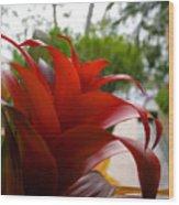 Christmas Plant Wood Print