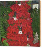 Christmas Poinsettia Display 002 Wood Print