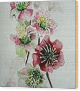 Christmas Rose Wood Print