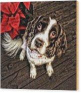 Christmas Springer Wood Print