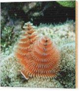 Christmas Tree Worm Wood Print