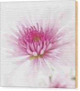 Chrysanthemum #003 Wood Print