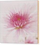 Chrysanthemum #004 Wood Print