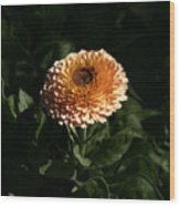 Chrysanthemum Fire 09 Wood Print