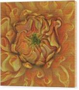 Chrysanthemum Wood Print