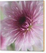Chrysanthemum #001 Wood Print